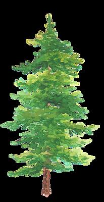 Pine28.png