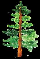Pine5.png