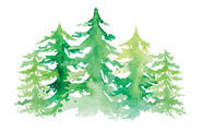 Pinetreeforest2.png