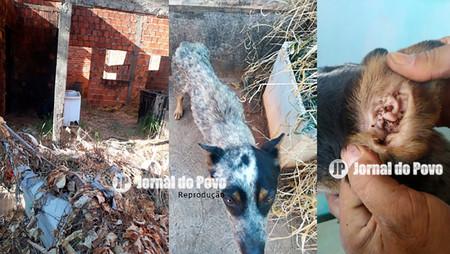 MAUS-TRATOS: ONG Spaddes resgata mais um animal. Dono seria um estudante de Veterinária
