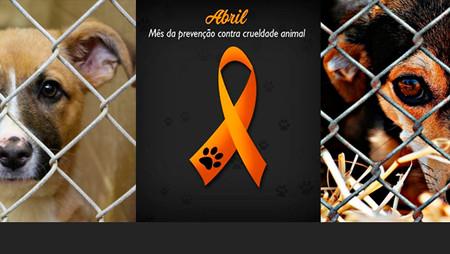Diretor de ONG alerta para prevenção contra crueldade animal