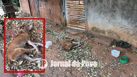 MP recebe denúncia e aciona ONG Spaddes para atendimento a cachorro abandonado na Zona Sul