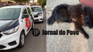 ONG Spaddes resgata cachorro em situação de maus-tratos e dona é presa, na Zona Sul de Marília