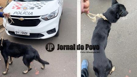 Mulher é presa em flagrante acusada de maus-tratos contra cachorro na Zona Norte de Marília