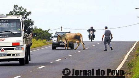 Serviços de guincho e assistência do DER continuam suspensos em rodovias da região