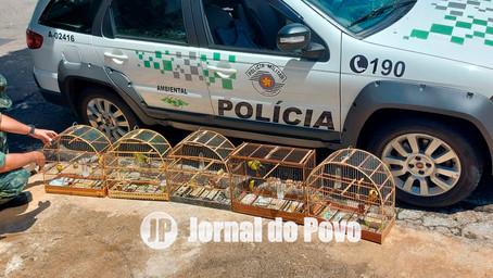 Polícia Ambiental apreende aves híbridas em casa na Zona Norte e multa morador em R$ 3 mil