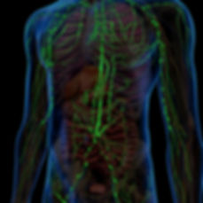 lymphatics.jpg
