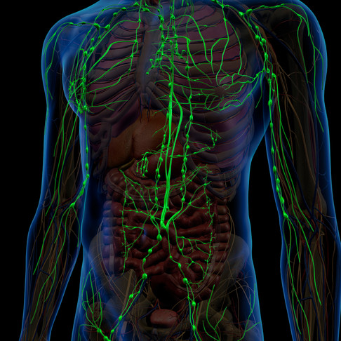 Activating the Lymphatic System for Increased Immunity