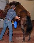 equine reproduction, semen collection, equine veterinerian, breeding