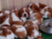 Bunch of puppies.JPG