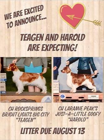 Teagan and Harold Expecting.PNG