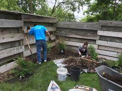 Planting lilac trees & shrubs