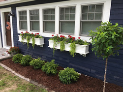New shrubs, annuals and trees.