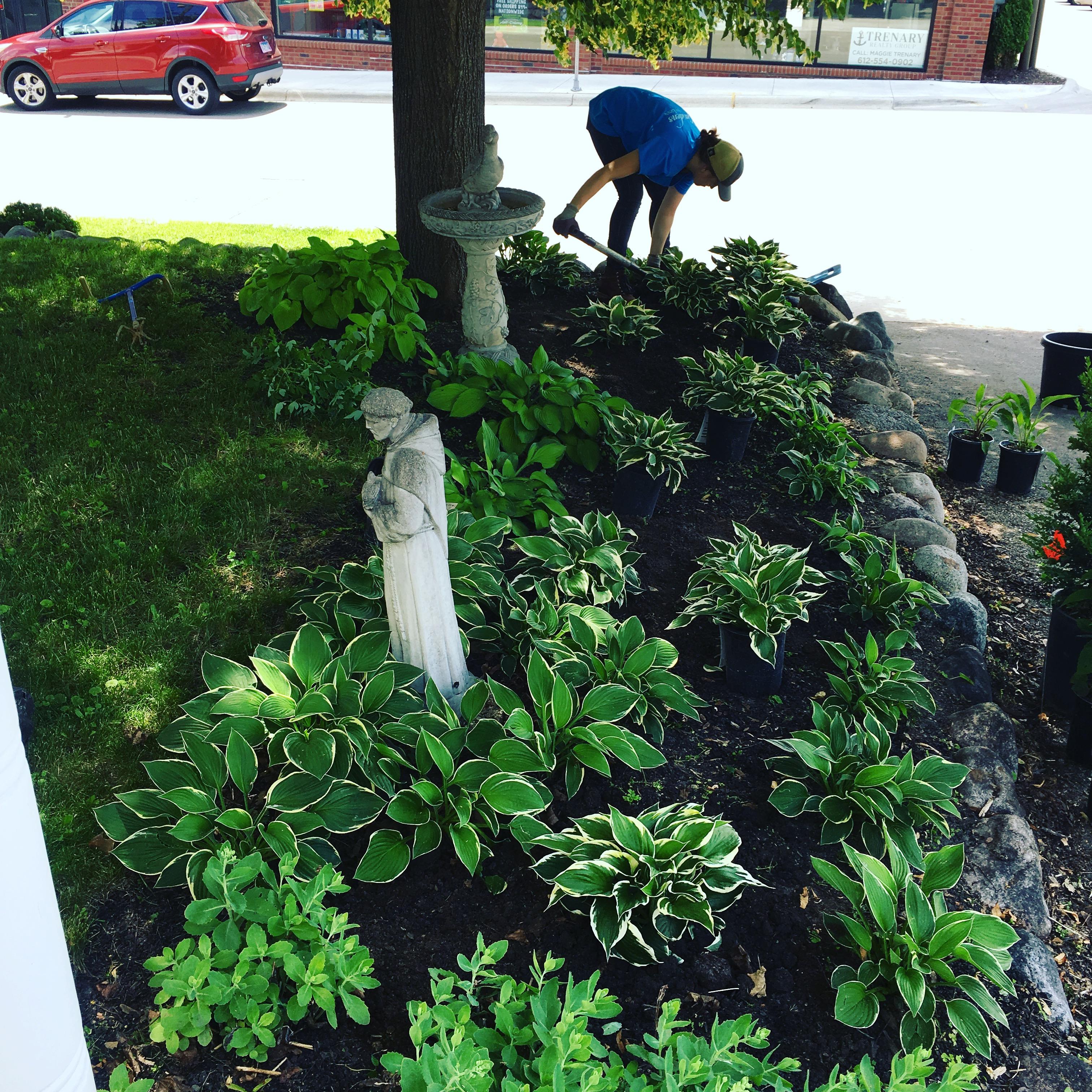 Planting a hosta garden.