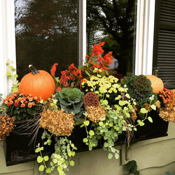 Pumpkins in window boxes really pop!