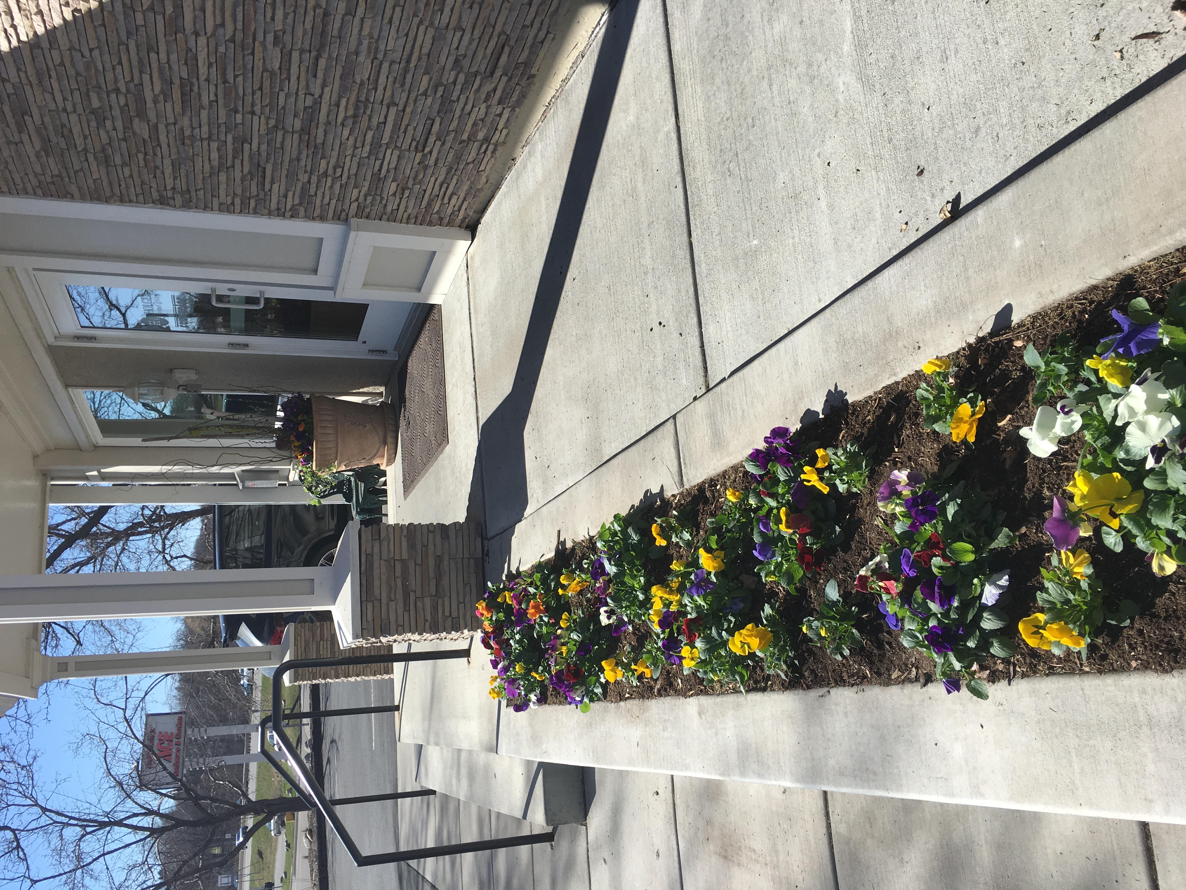 Pansies fill a large planter
