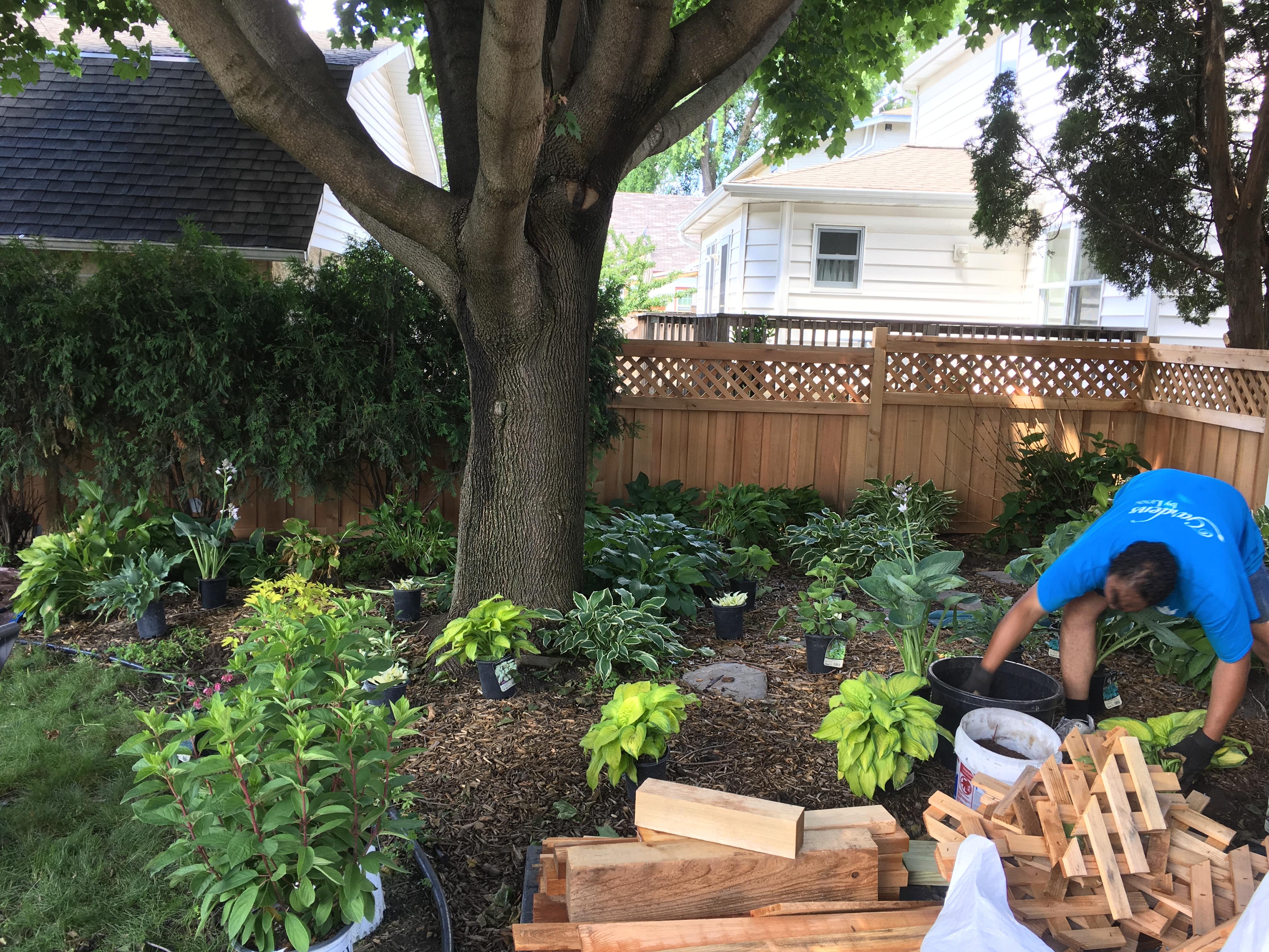 Creating a hosta garden