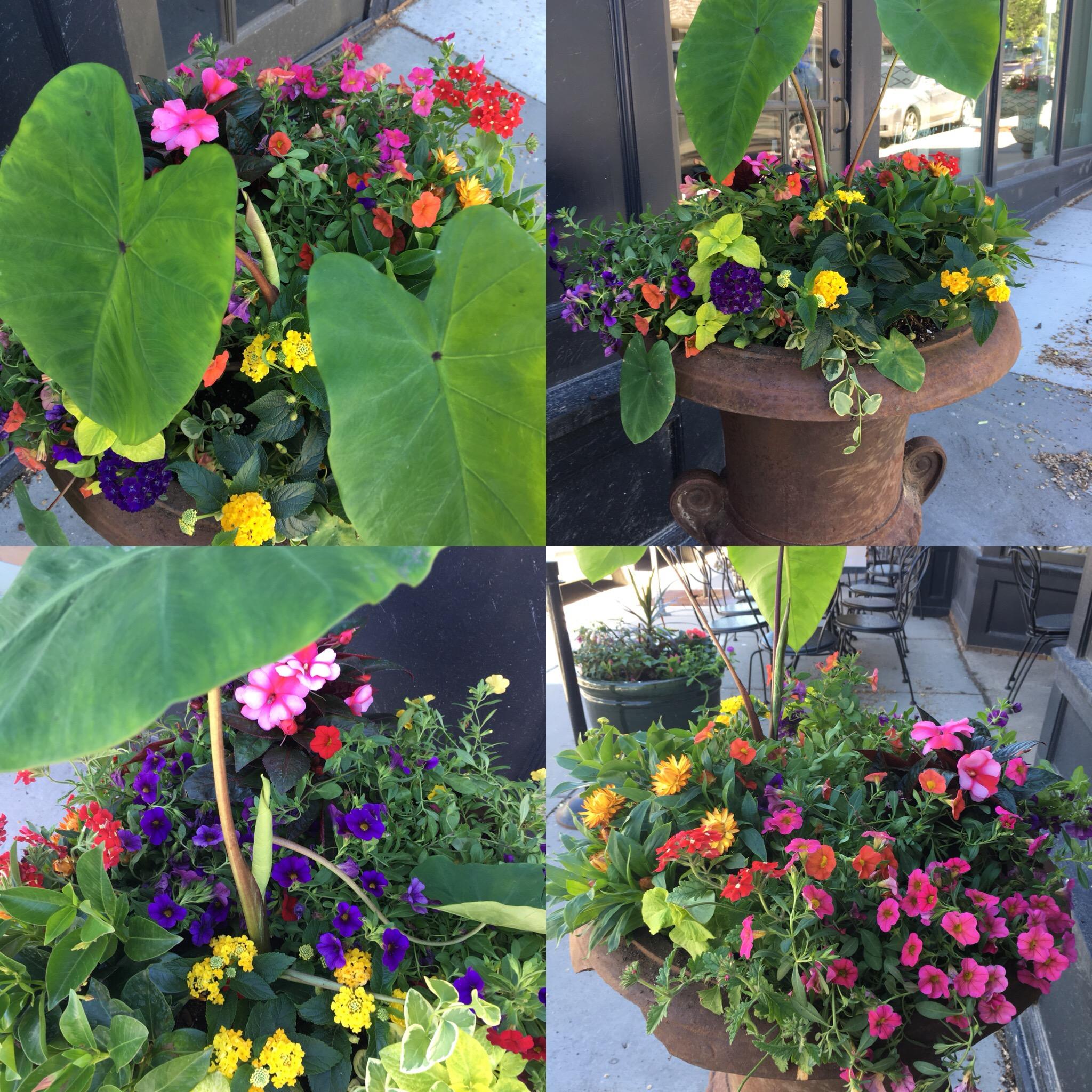 Pretty Summer Planters!