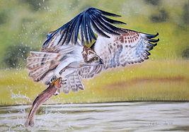 fish eagle.JPG
