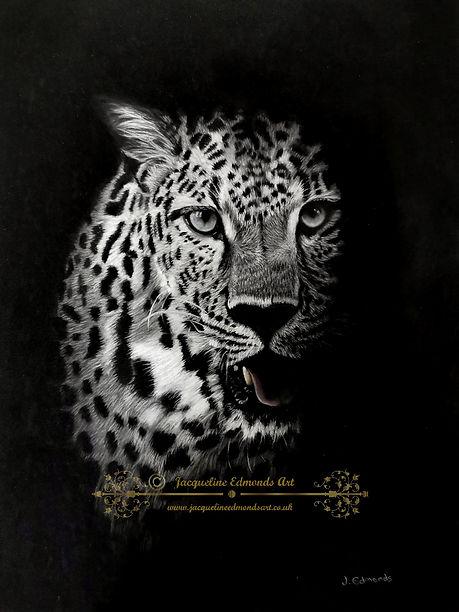 Leopard in the dark.jpg