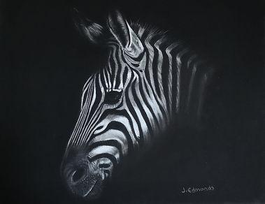 Zebra TWASI.jpg