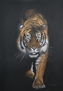Tiger in the dark.jpg