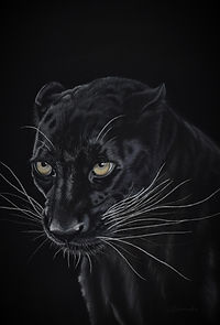 Panther print.JPG