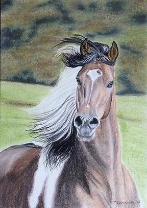 western horse.jpg