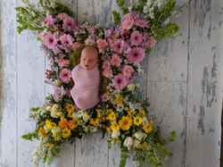 Flowers- baby butterfly
