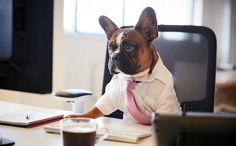 dog working 3.jpeg
