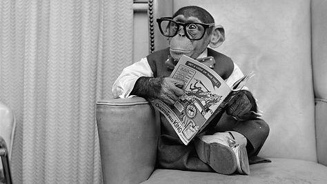 monkey reading 2.jpg