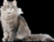 cat_PNG50517.png