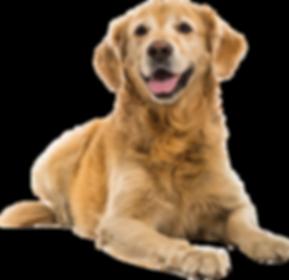 dog_PNG50348.png