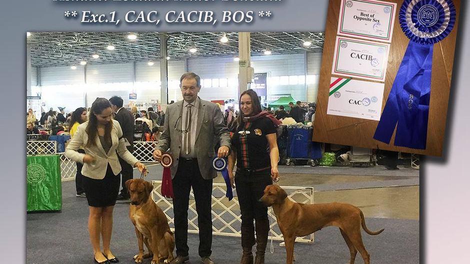 Výstava Winter Dogshow Budapešť Maďarsko 9.2.2019