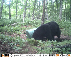1st day bear pic