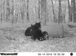 Couple Nice Bears 2019