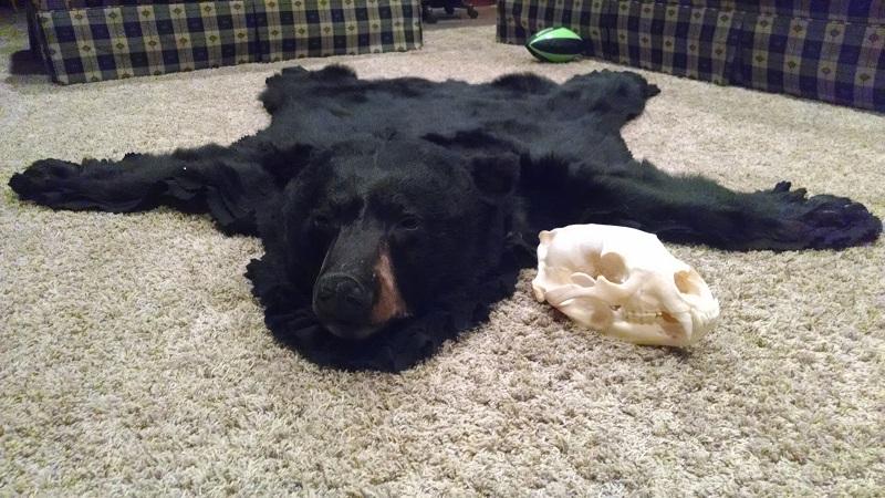 Gary's rug and skull 2012