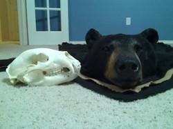 Beautiful rug and skull