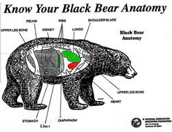 Bear Vitals