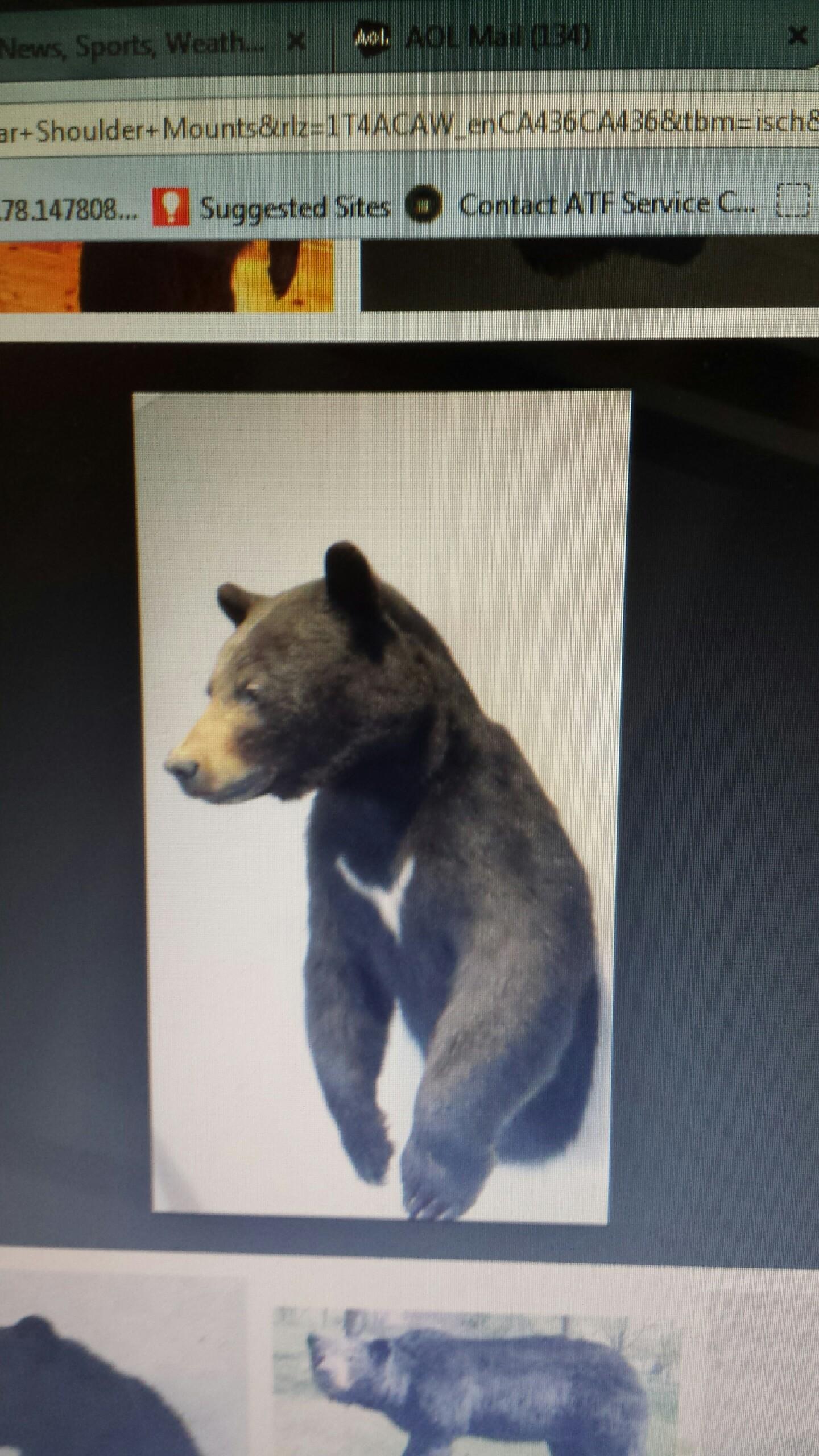 Kevin's bear 2015