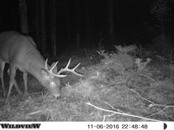 Another nice buck 2016