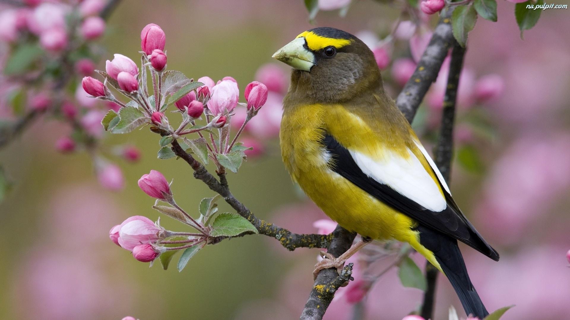wiosna-ptaszek-kwitnace-drzewo