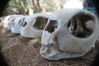 turtle skull.png