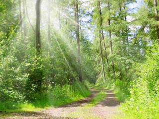 Forest bathing / Wald Therapie