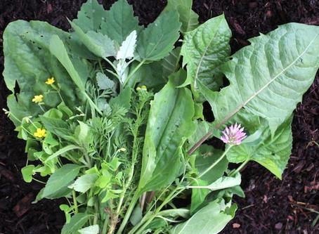 Wild Edible Weeds
