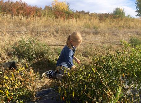 Boulder outdoor education program emphasizes environmental stewardship and emotional intelligence