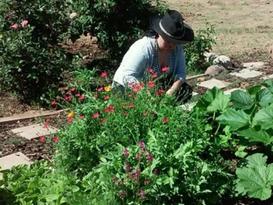 garden1.webp