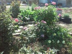 garden5.webp