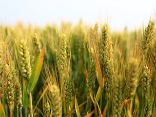 Cargill, Agrocorp close cross-continent commodity trade transaction via blockchain