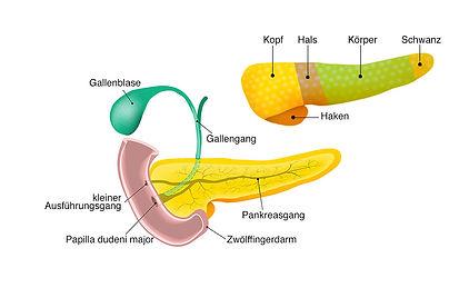 PankreasAnatomie.jpg